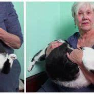 Hand Spinner Le Plus Cher Au Monde : trop mignon voici taro le chat le plus poli du monde ~ Medecine-chirurgie-esthetiques.com Avis de Voitures