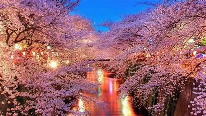 Cherry Blossom Desktop Blossoms Wallpapers Lights Wallpapertag