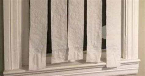 Paper Blinds by Why Mini Blinds Would Be For Your Cat