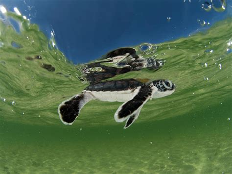 ¿how Many Different Types Of Sea Turtles Are There?