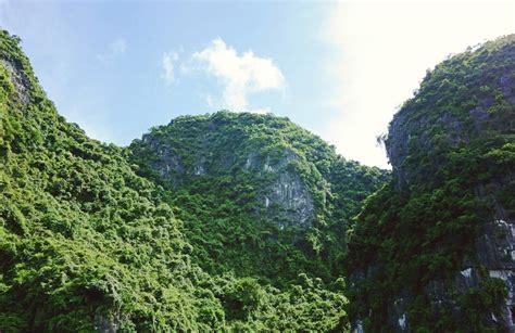 木々が覆い尽くす巨大な岩山の美しい写真