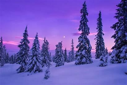 Winter Snow Forest Landscape Nature Desktop Wallpapers