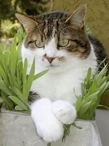 Mit Katze Umziehen : fachinfo umzug mit katzen wohnungswechsel katze ~ Michelbontemps.com Haus und Dekorationen