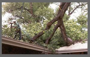 Large Tree Removal Service In Jacksonville, Fl. Forensic Accounting Degrees Accd San Antonio. Harp Refinance Qualifications. Where Can I Sell My Timeshare. Wireless Access Point For Business. Bad Boys Bail Bonds Oakland Banks In Hemet. Open Up A Free Bank Account Ch 10 Sacramento. Healing Umbilical Cord Lead Flashing For Sale. Carpet Cleaning Florida Bankruptcy Laws In Nc