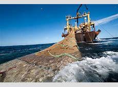 Greenpeace demanda a la Unión Europea que identifique