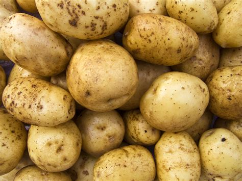 pomme de terre agria au kg ferme schmitt