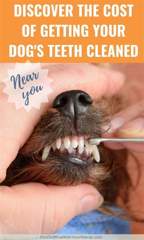 cost    dogs teeth cleaned dog