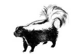 Striped Skunk Drawing