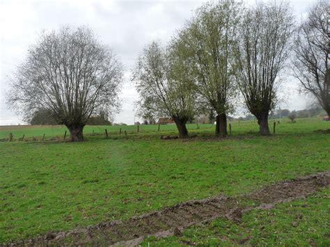 Opération « Un saule taillé, dix saules plantés » au Pays ...