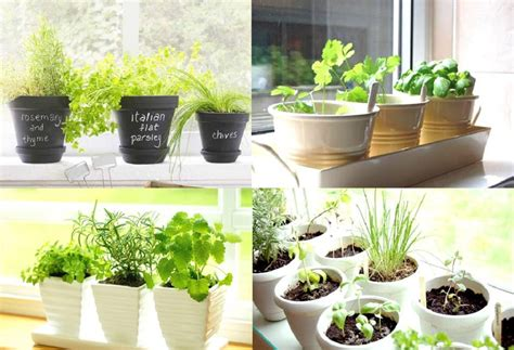 kitchen herb garden ideas carters kitchenion amazing