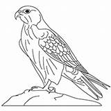 Falcon Coloring Gyrfalcon Drawing Peregrine Line Millennium Printable Designlooter Drawings Getdrawings 230px 17kb sketch template