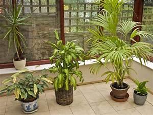 Pflanzen Im Schlafzimmer : keine pflanzen im schlafzimmer schlaftipps schlafen leinenweberei chur schlafzentrum und ~ Indierocktalk.com Haus und Dekorationen