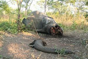 Anti-Poaching | Friedkin Conservation Fund's Blog | Page 2