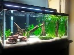 22 best images about Zen aquarium on Pinterest
