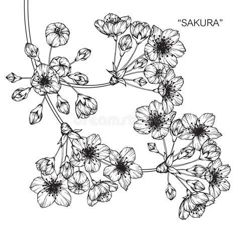 Dibujo Y Bosquejo De La Flor De La Flor De Cerezo