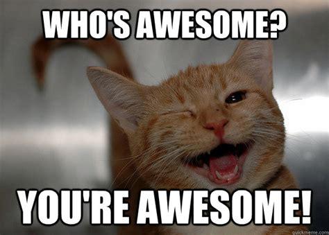 Thank You Cat Meme - image gallery hard work cat meme