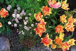 Bodendecker Blühend Winterhart Sonnig : fr hbl her zwiebelblumen u bodendecker meine gartengestaltung ~ Frokenaadalensverden.com Haus und Dekorationen
