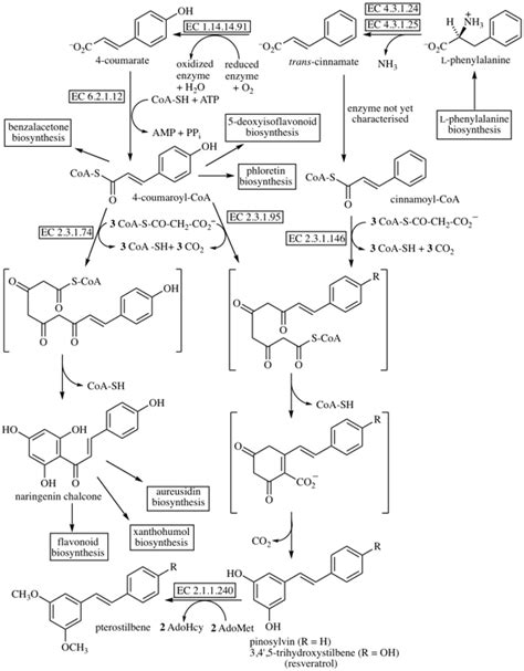 Chalcone Biosynthesis
