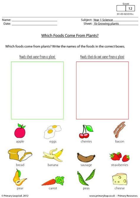 which foods come from plants primaryleap co uk