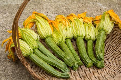 cuisiner les fleurs de courgettes recette des beignets de fleurs de courgette