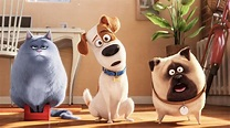 Box Office: 'The Secret Life of Pets' Posts 6th $100M ...