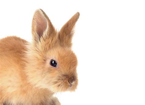 Rabbit Resume Cost by Resume Rabbit Price