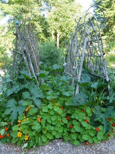diy garden trellis ideas trash backwards