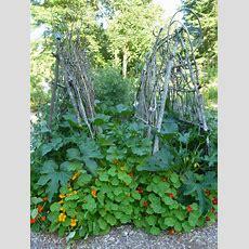 Diy Garden Trellis Ideas  Trash Backwards Blog