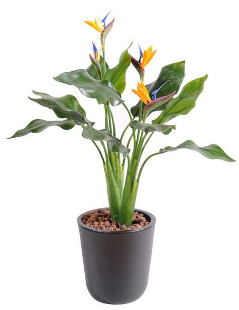 plante d interieur fleurie plante fleurie artificielle strelitzia en piquet int 233 rieur ext 233 rieur 50 cm vert orange