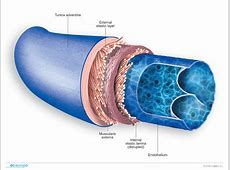 Phlebology Medical illustration eceurope