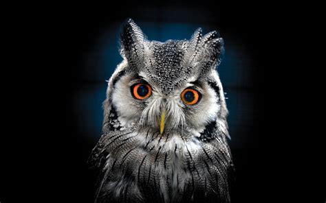 owl wallpaper  wallpaper hd  desktop wallpaperscom
