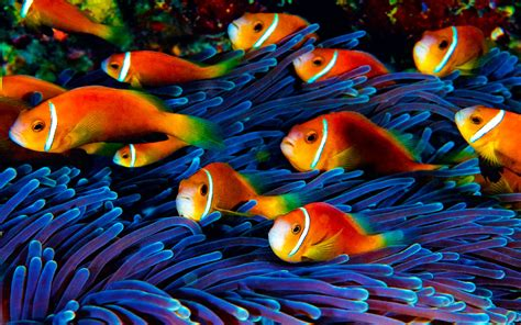 fish wallpaper hd underwater world wallpaperscom