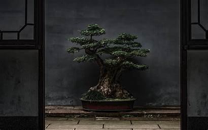 Bonsai Tree Plant Door 4k Background Decorative