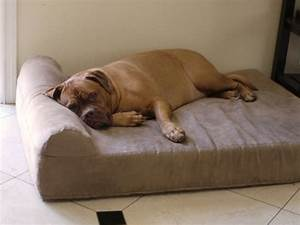 5 best dog beds for senior arthritic dogs for Best bed for older dog