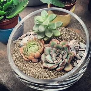 Pflanzen Für Drinnen : sukkulenten f r drinnen der gr ne blickfang im innenraum ~ Frokenaadalensverden.com Haus und Dekorationen