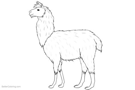 Coloring Drawing by Llama Coloring Pages Realistic Drawing Free Printable