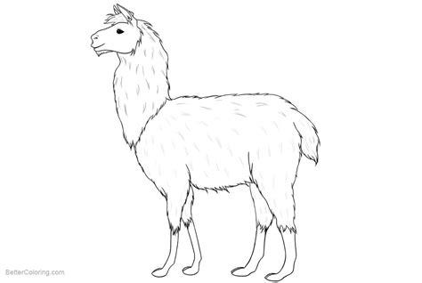 llama coloring pages realistic drawing  printable