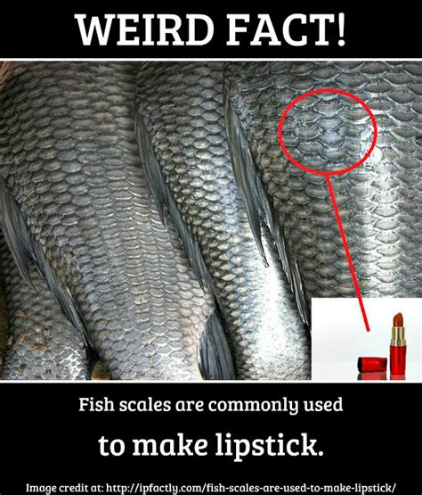 fish scales  commonly    lipstick