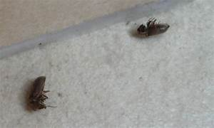Lèvre Enflée Bouton : petit insecte maison ecole sante ~ Medecine-chirurgie-esthetiques.com Avis de Voitures