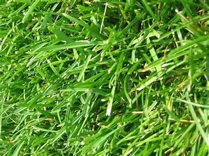 Best 25 Types Of Lawn Grass Ideas On Pinterest Lawn, Lawn ...