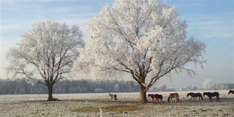 Gute Idee Osteopathie Pferde Im Herbst Und Winter