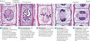 Bio 111 Study Guide  2012-13 Dr Morgan