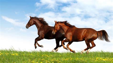 horse running hd brown grass horses field desktop wallpapers 4k resolution