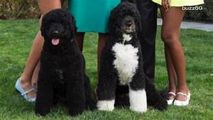 Man attempts to steal one of President Obama's dogs