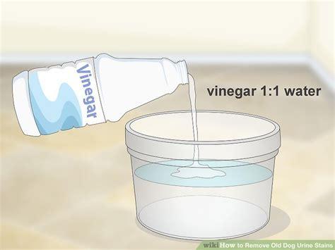remove urine stains  carpet  vinegar tcworksorg
