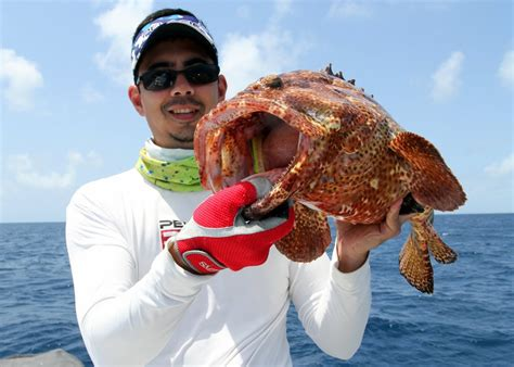 grouper catch fishing groupers tips