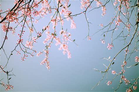 light pink flowering tree blue flower light pink pretty sky image 28035 on favim com