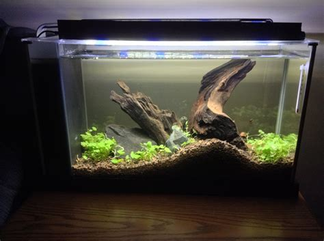 fluval spec aquascape fluval spec v with hydrocotyle sibthorpioides