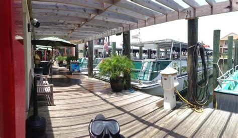 Glass Bottom Boat Tours Alabama by Dolphins At Sanroc Cay Marina Picture Of