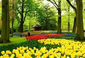 Planter Des Bulbes : bulbes d 39 t planter et entretenir des bulbes d 39 t ~ Dallasstarsshop.com Idées de Décoration